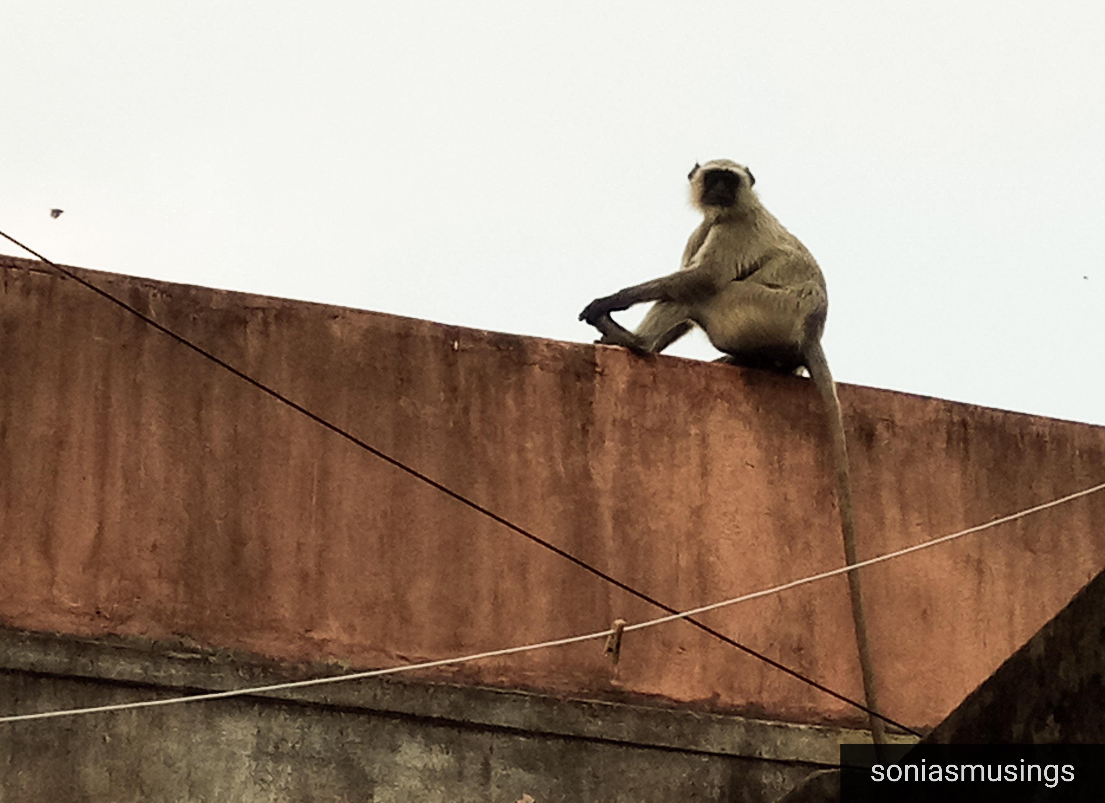 Monkey and eroding humanity
