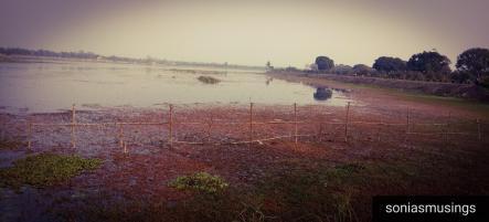 Motijheel Lake.jpg