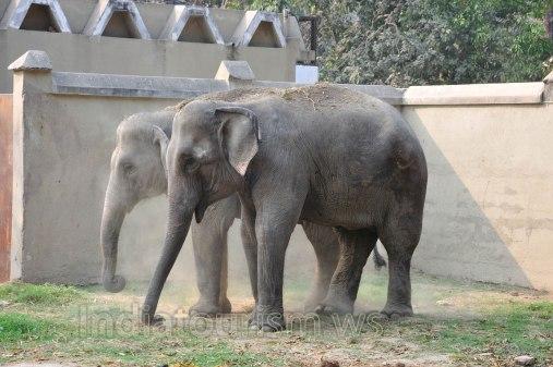 Zoo - Elephant