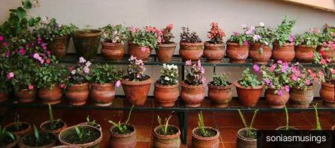 The row of flower pots
